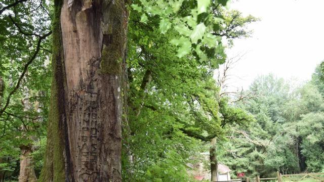 champfremont-les-initiales-des-resistants-gravees-dans-un-arbre-conservees-grace-une-reproduction